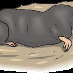 Ground moles